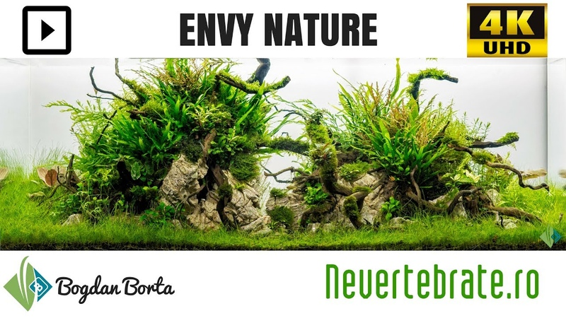 Envy Nature by Bogdan Borta