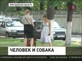 В Ярославской области и Татарстане владельцев животных