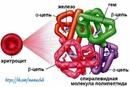 Какой гемоглобин должен быть у детей