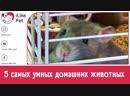 5 самых умных домашних животных на ilikepet