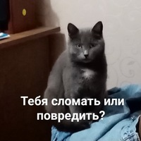 АрнольдКот