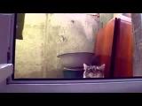 Приколы с кошками смотреть всем!