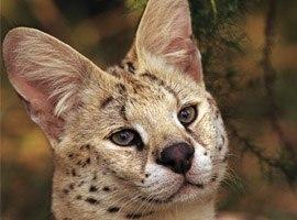 Картинки самые милые котята в мире - 607