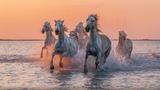 The Song of the Wild Horse - Mari Boine