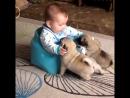 малыши и собачки