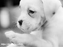 «Если бы только люди могли любить как собаки, мир стал бы раем» Джеймс Дуглас
