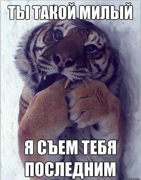 http://cs419824.vk.me/v419824063/ae83/ZgEB_KO8Xms.jpg