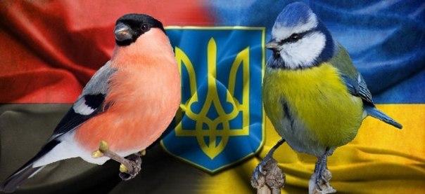 """""""Украинских школьников заставляют кормить синичек - они желто-голубые, а снегирей убивать - это символ России"""", - новый маразм росТВ - Цензор.НЕТ 2562"""