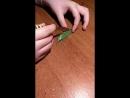 Горошек зеленый в стручке з