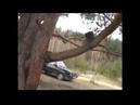 Кот Васька в лесу зимой. Песня про кота.