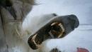 Wild Polar Bear Tries To Break In | BBC Earth