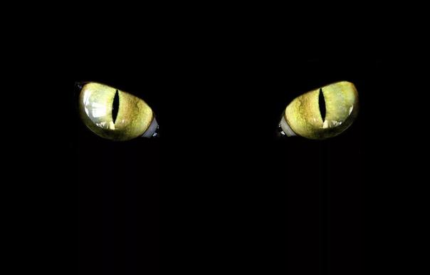 Время сказок Я люблю это время. Время между явью и сном, когда в комнате выключается свет, и воцаряется мрак, и лишь тени изредка пробегают по стенам, танцуя с бликами света, попадающего сквозь