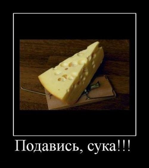 http://cs405824.userapi.com/v405824433/2793/Ln_uMWv0_TM.jpg