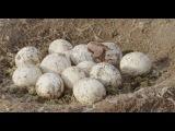 «Прогулки с динозаврами 3D» (2013): Трейлер №3 (дублированный) / Официальная страница http://vk.com/kinopoisk