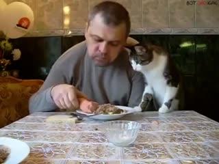 Наглый котэ (ВоК)