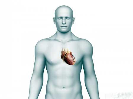 Ангиография может быть выполнена, чтобы исследовать сердце