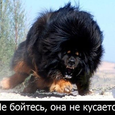 Егор Павлов, 10 сентября 1995, Омск, id201040014