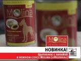 Консервированный корм для собак Molina «Цыпленок с папайей в нежном соусе»