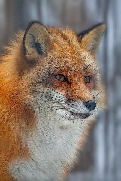 V1s1YCFUjSs - В мире животных
