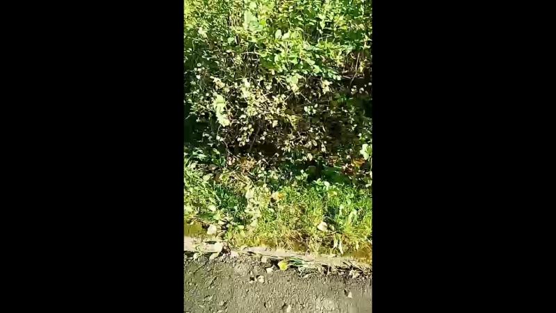 замер деревья под спил