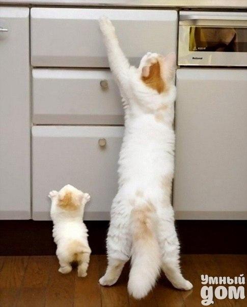 Животные и их детеныши :) Умный дом - отдыхаем всей семьей!