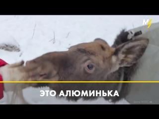 Спасение животного