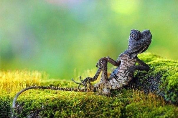 Расслабленный хамелеон на индонезийском острове