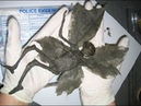 Биологические артефакты из ДРУГОГО мира.Фермер в Мексике потерял дар речи,когда это увидел на ранчо