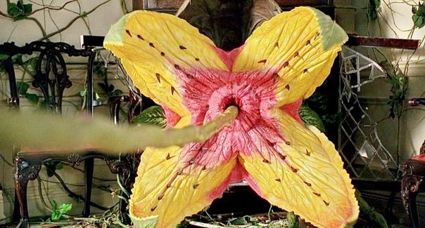 Кадры из фильма «Джуманджи», 1995 год. Режиссёр: Джо Джонстон.