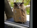 Honey looks like we have a new mailman