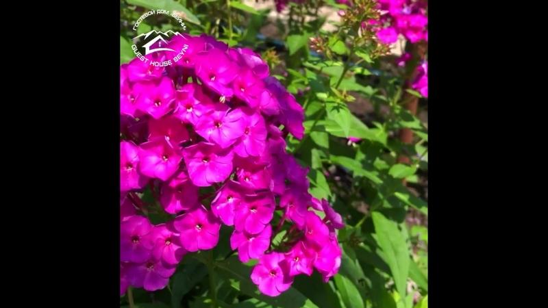 Видео о красоте сада и огорода гостевого дома Бейни