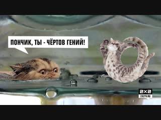 Морские котики [1 серия,