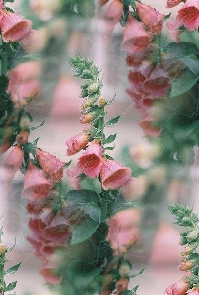 Цветочные и растительные фоны - Страница 3 ElpkvdmENHE