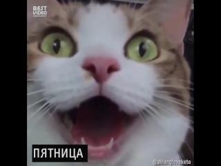 Если бы дни в моей неделе были котами