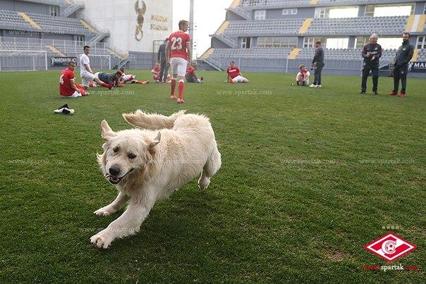 животные и спорт, Спартак, фото
