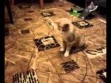 Кот нападает на самолет