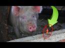 Видео для детей Фиксики, Маша и Медведь в деревне, ищем Нолика (5 серия на KidsFM) Ева ...