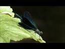 Лесной ручей релакс-видео