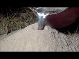 Вам интересно узнать как выглядит муравейник изнутри? А что если залить такой алюминием и создать его скульптуру?