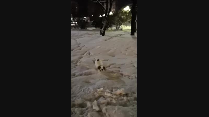 Бейси на прогулке