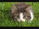Интересная инфа про котов