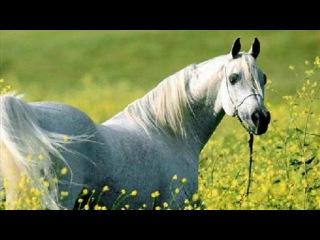 Любэ Только мы с конём по полю идём