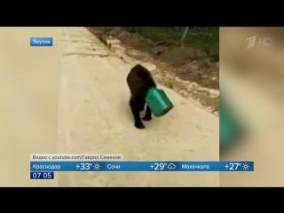 Медведь с канистрой на голове