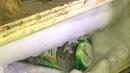 У жителя Ярославской области изъяли 15 килограммов конопли и полсотни кустов