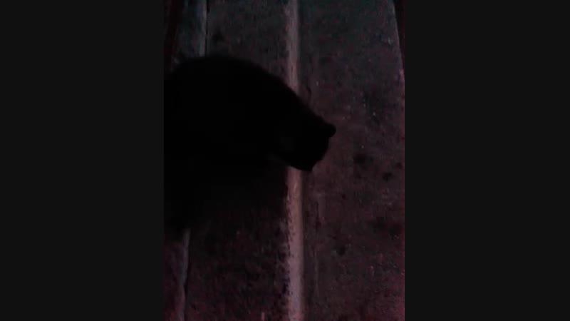 Найден кот » Freewka.com - Смотреть онлайн в хорощем качестве