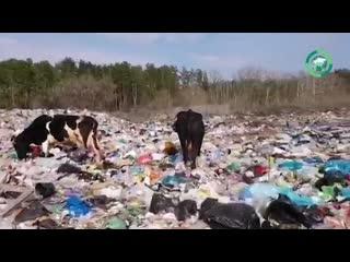Парк «Самарская лука» превратился в свалку. Источник: ФАН-ТВ