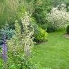 Новый сад