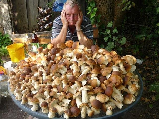 Теперь грибы на завтрак, обед и ужин, очень смешные приколы