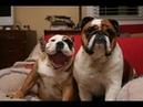 ПОПРОБУЙ НЕ ЗАСМЕЯТЬСЯ - Смешные Приколы и фейлы с Животными до слез, смешные собаки 68