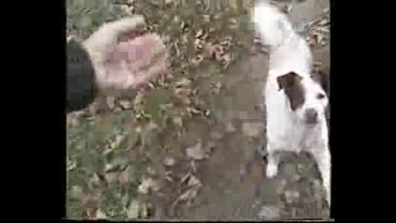 001_друг кайзер-асисяй и его собака бим и певец пророк сан бой.